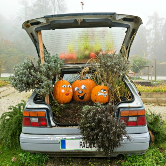 Pumpkin car decorations in a car trunk.
