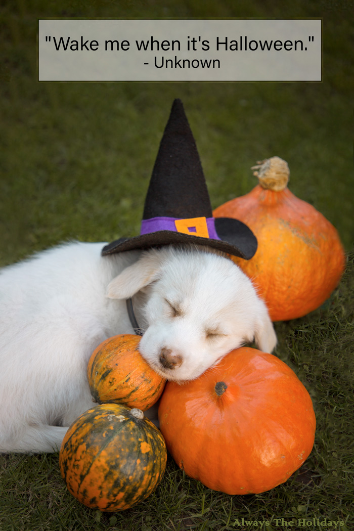 "A puppy wearing a witch hat sleeping on pumpkins with a Halloween quote overlay reading ""Wake me when it's Halloween.""."