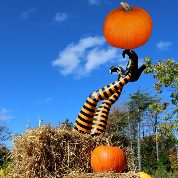 Witch legs with pumpkins and hay bales
