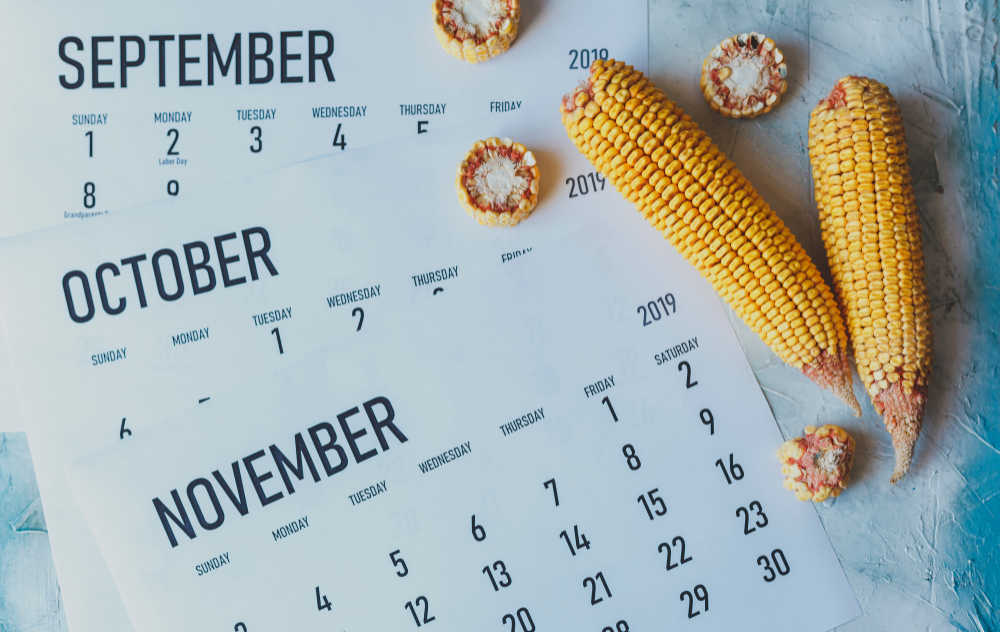 Corn cobs and pieces with calendars for September, October and November.