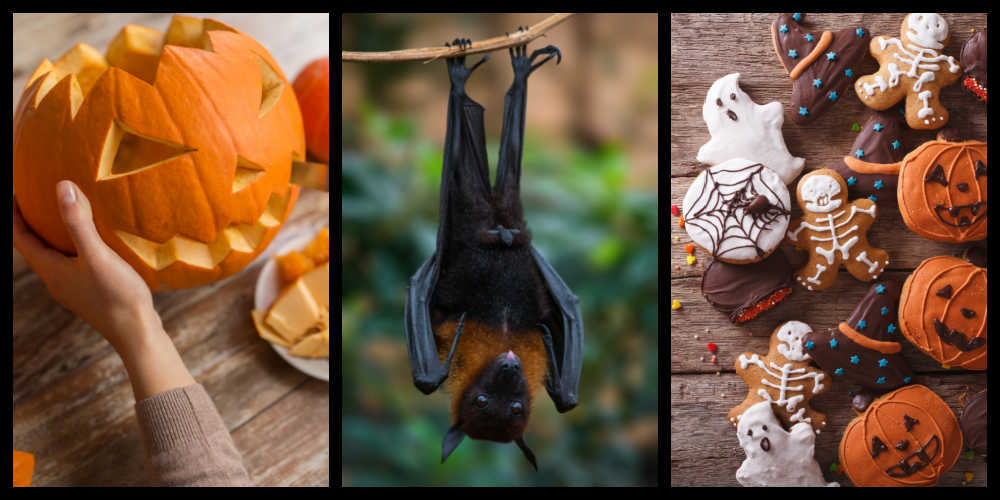 Carving a pumpkin, bat hanging, and Halloween cookies.