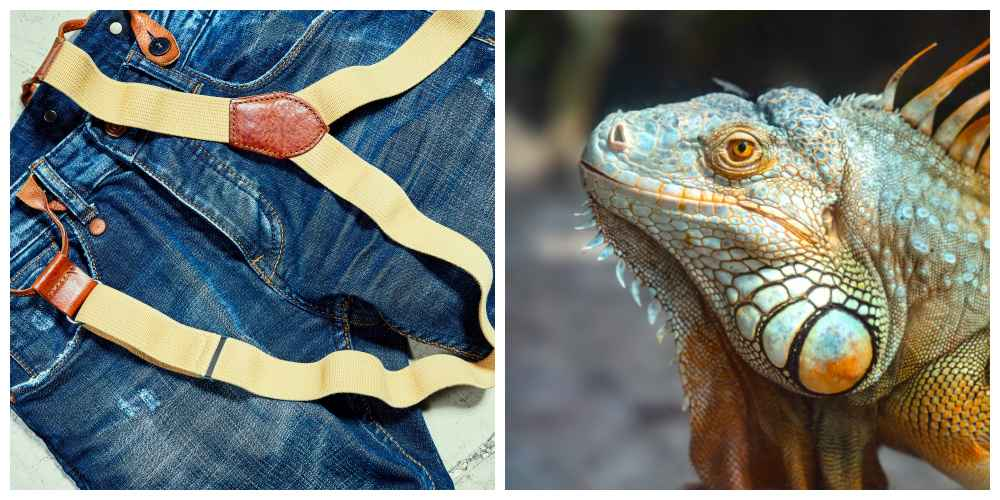 Suspenders and lizard in a collage.
