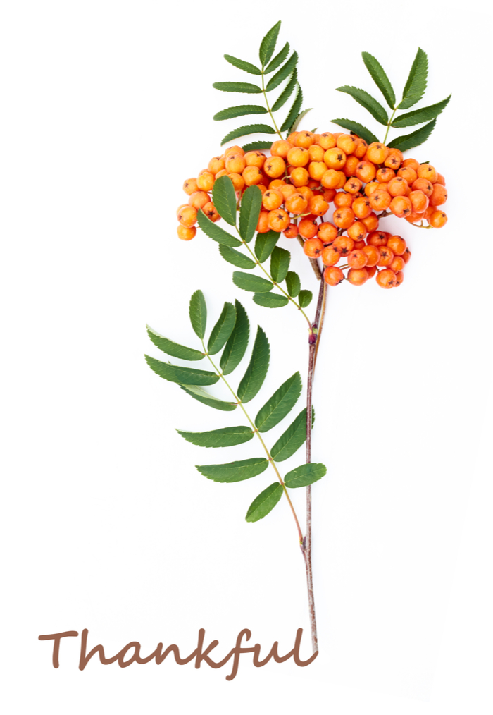 "A single branch with leaves and orange flowers with the word ""thankful"" below it."