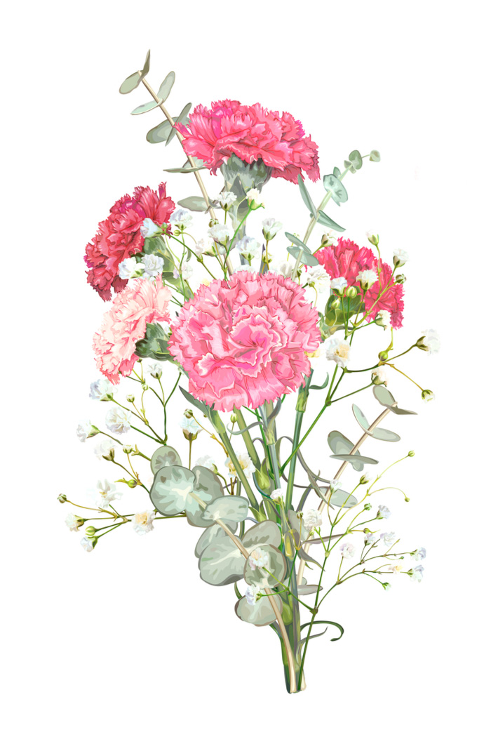 Drawing of a bouquet of carnations for National Carnation Day.
