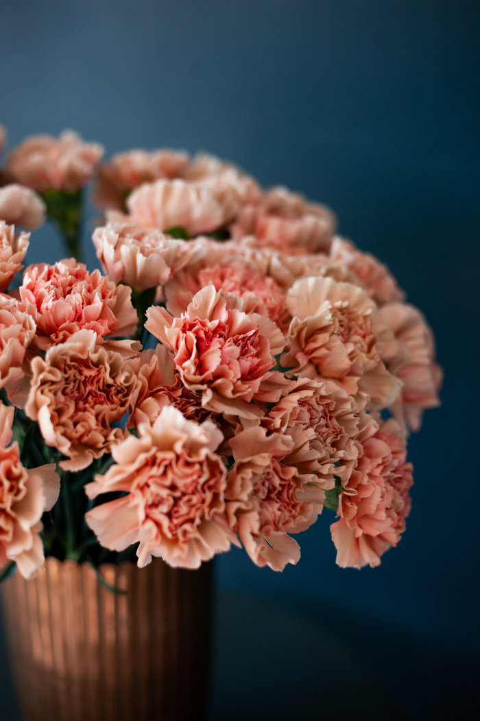 A bouquet of pink carnations to celebrate National Carnation Day.