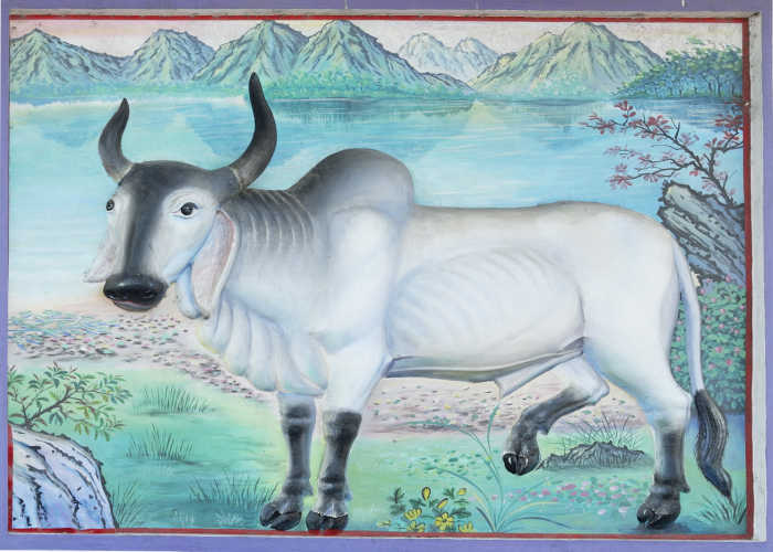 Drawing of an ox.