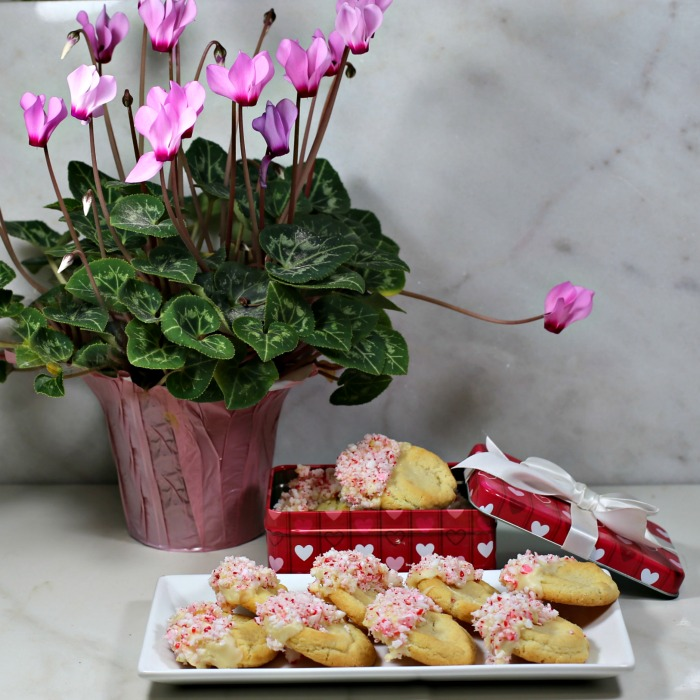 Plate of peppermint cookies with a pink cyclamen plant.
