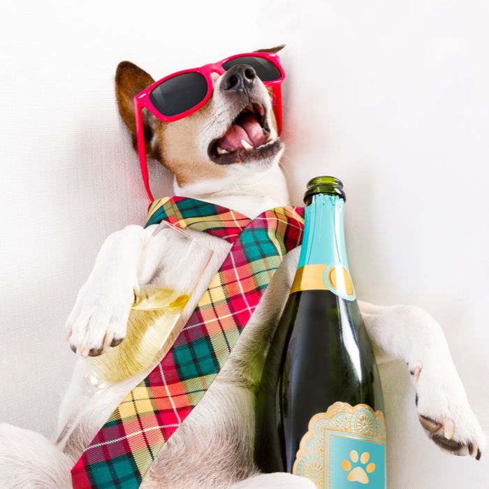 Drunk dog with a tie, sunglasses and champagne sleeping on a couch on National Football Hangover Day.
