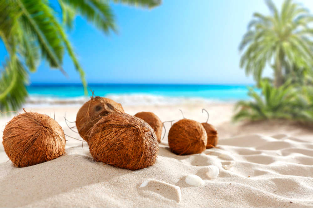 Coconuts on a beach with a blue sky and coconut trees in the background.