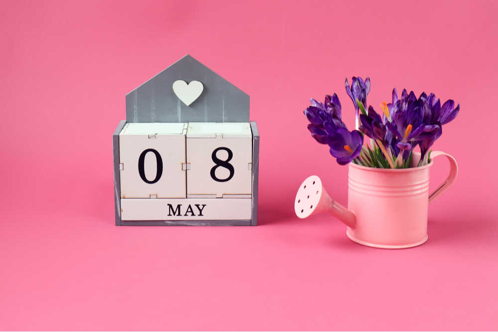 Blocks that read May 8 to celebrate the May 8 national days on a pink background next to a pink watering can with purple flowers in it.