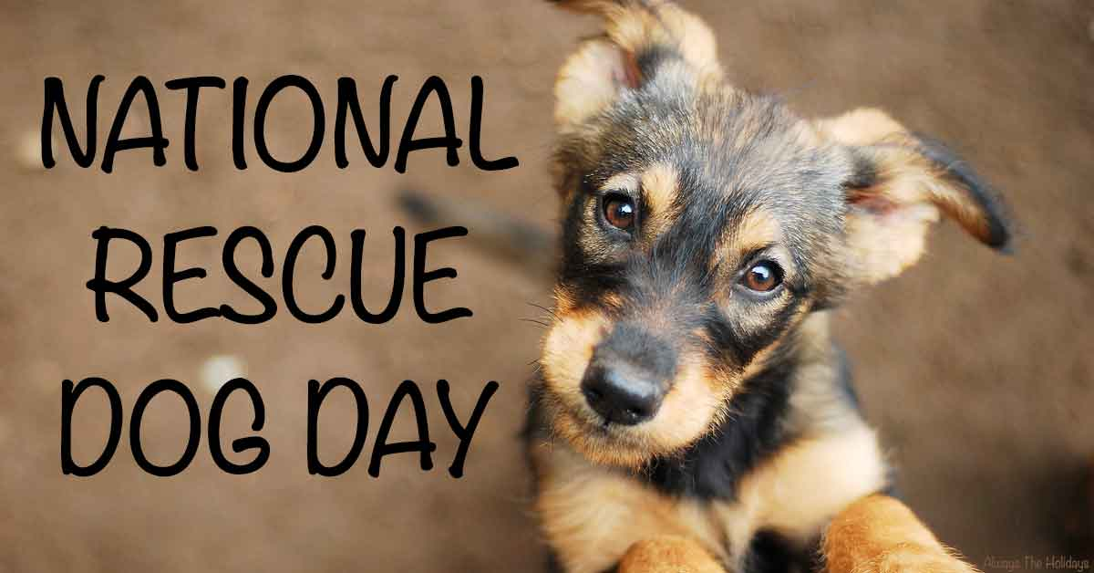 A mixed breed puppy on a brown background with a text overlay for National Rescue Dog Day.