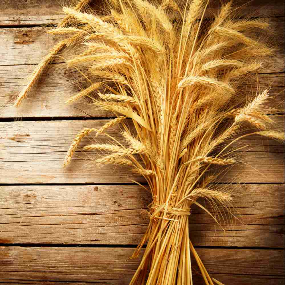 A sheaf of what to celebrate All Saints' Day on a wooden background.